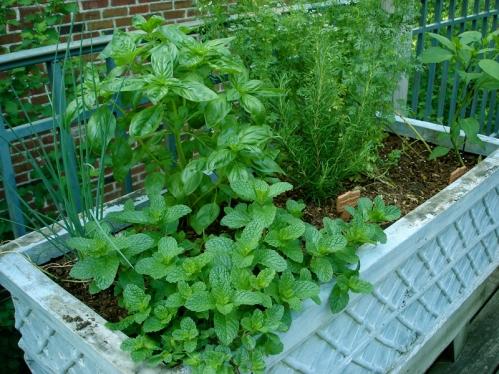 Herb mixed pot.JPG
